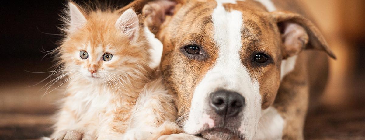 King George Veterinary Clinic | King George, VA 22485